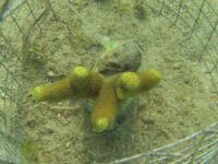 Snail Feeding on Coral