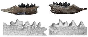 The fish predator's teeth