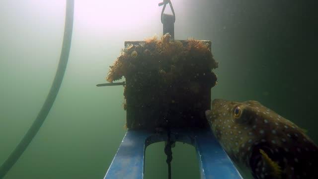 Fish Predation on Marine Invertebrates