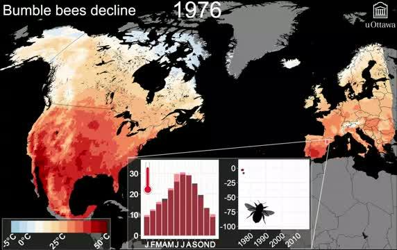 Bumble Bees Decline