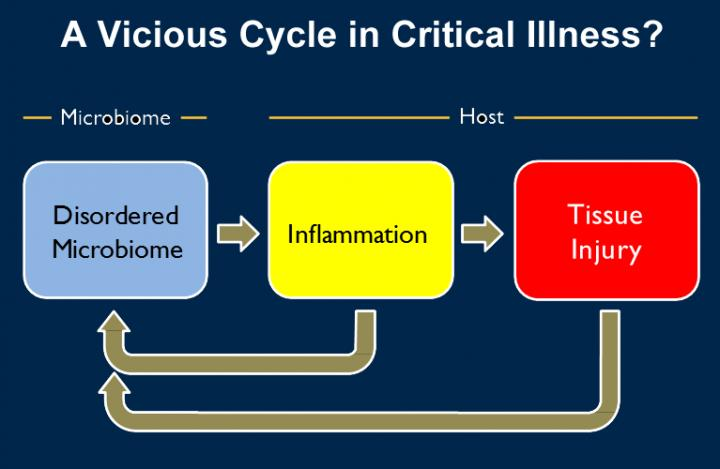Vicious Cycle in Critical Illness