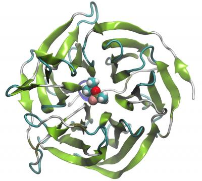 Bioscavenger