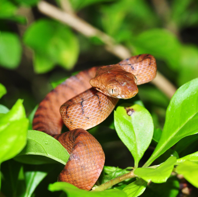 Extinct Snake