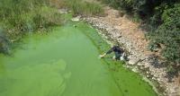 Sampling Algal Bloom