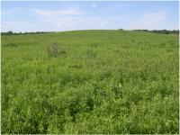 Restored Polyculture Prairie
