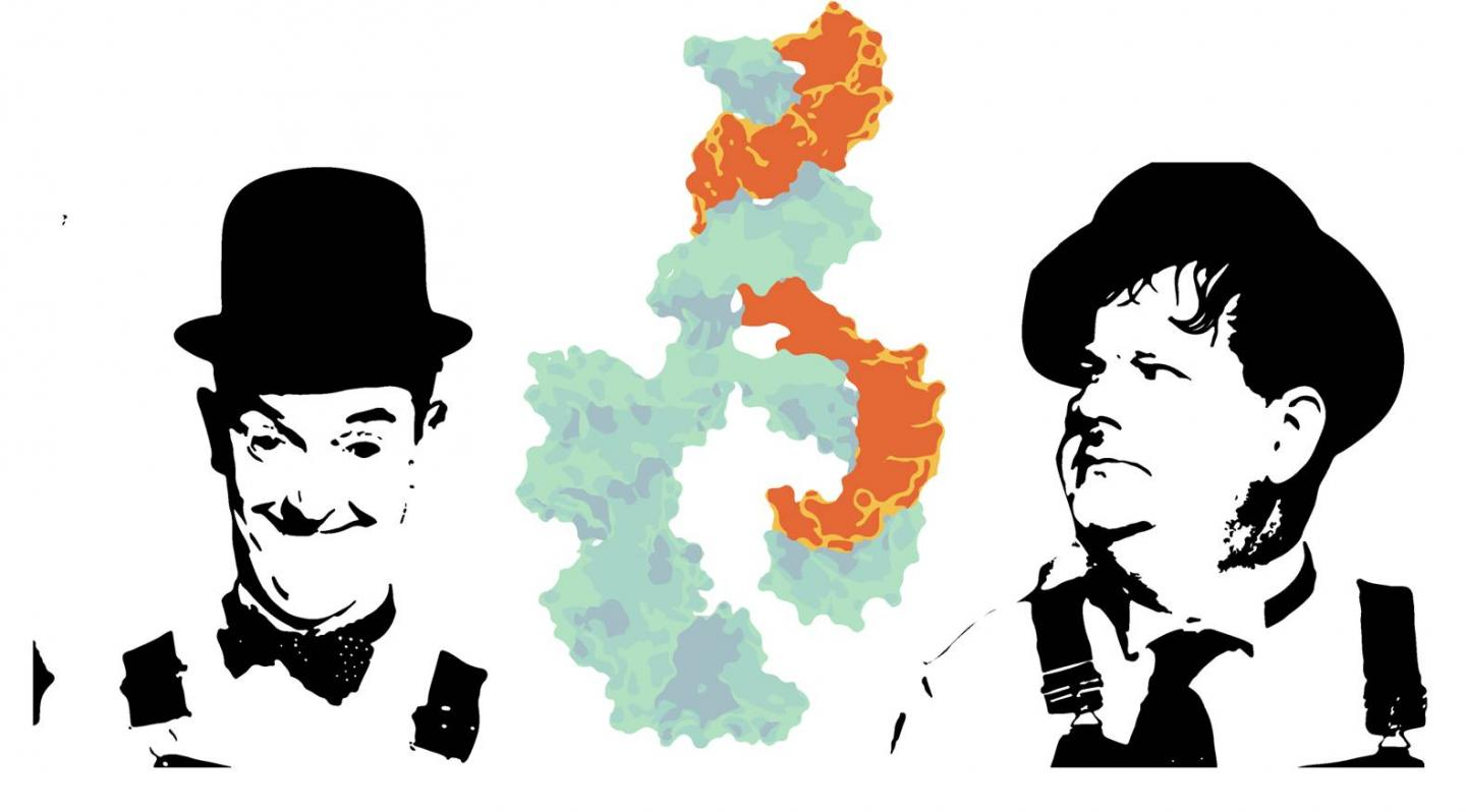 Laurel and Hardy and MicroRNA Connection