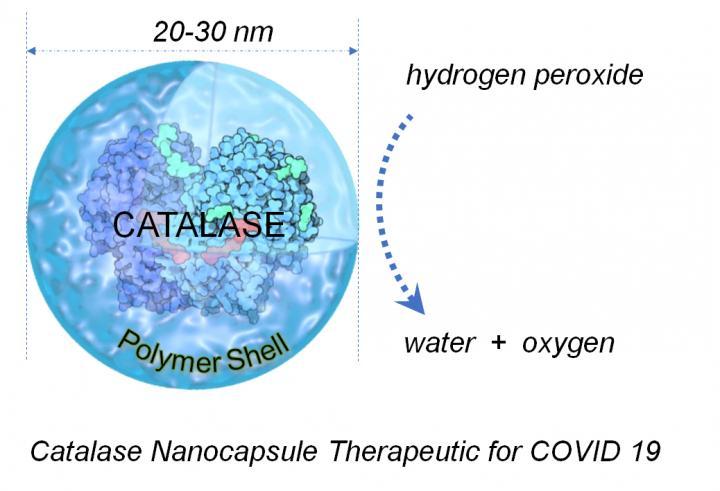 catalase diagram