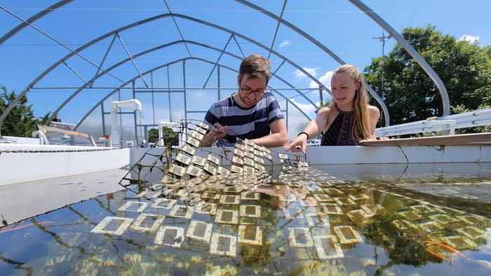 Examining plastics exposed to sunlight