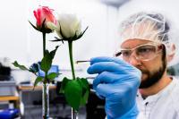 David Poxson, Laboratory of Organic Electronics, LiU
