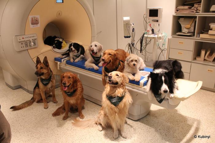 Dogs around fMRI