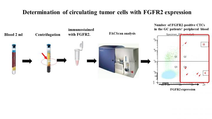 Determination of circulating tumor cells with FGFR2 expression