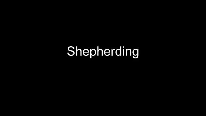 "Video of mice ""shepherding"""