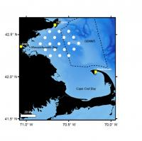 Right Whales Study Area Map
