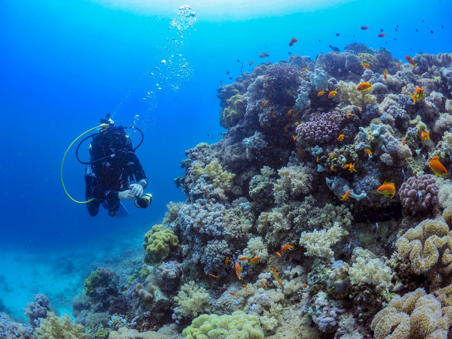 Studying corals in the Red Sea off the coast of Thuwal, Saudi Arabia.