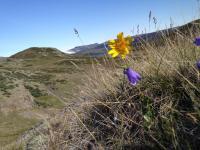 Greenland Wildflowers