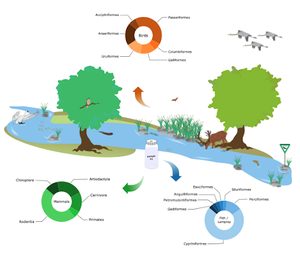 Freshwater-associated vertebrate community