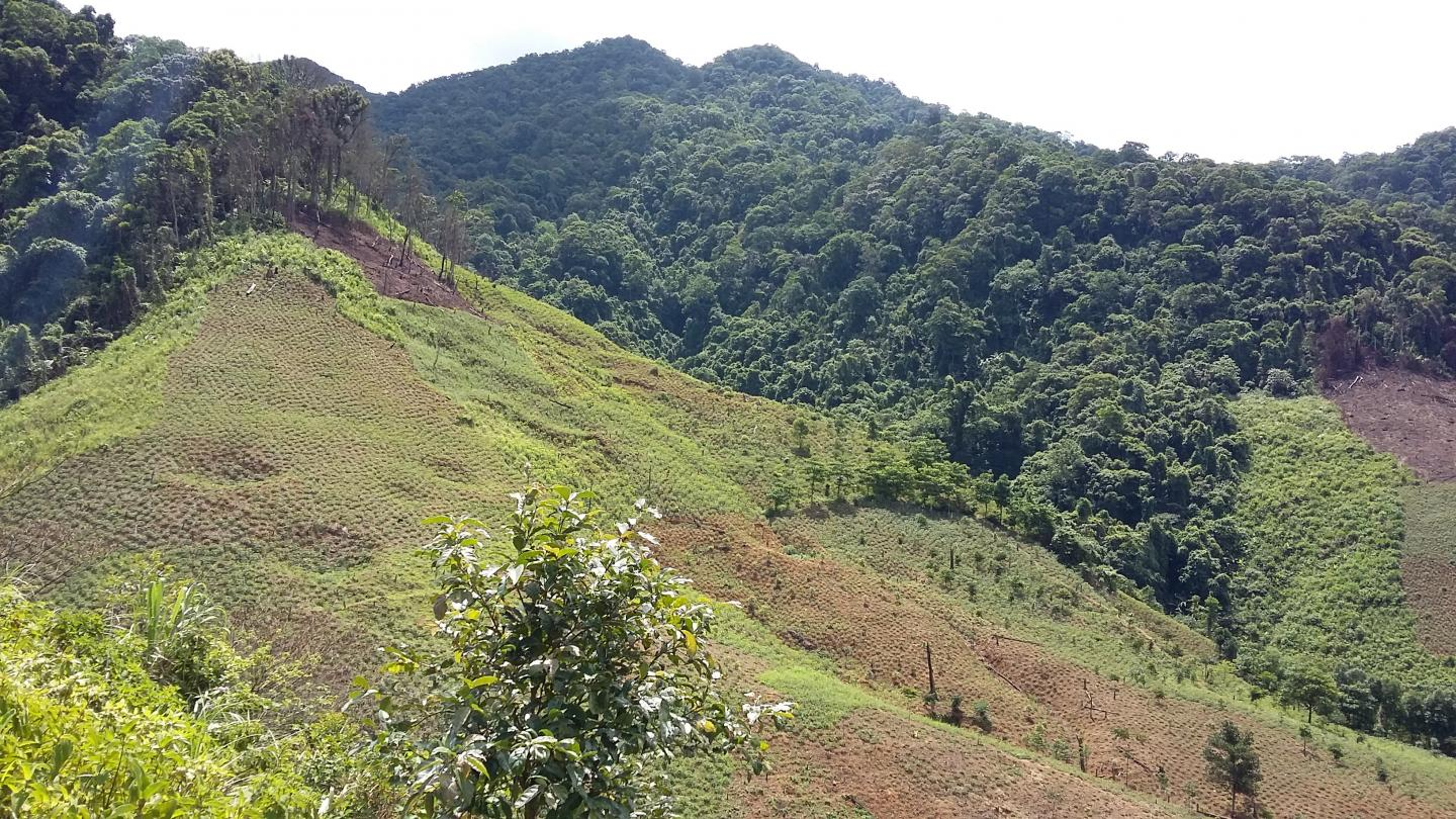Forests cleared for agriculture on Vietnam mountains