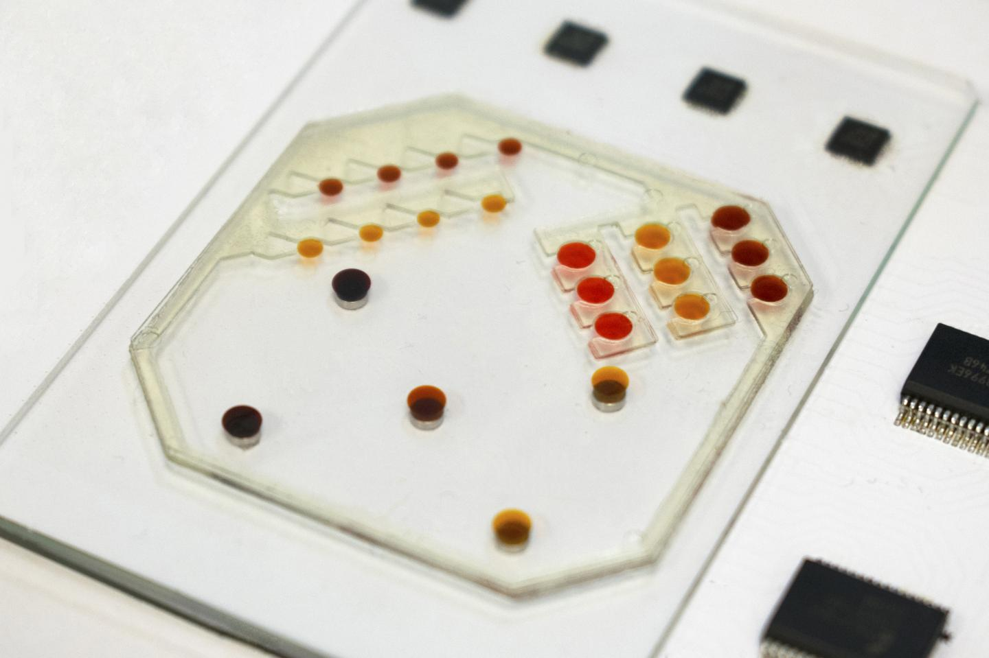 Photo of the Robots-On-A-Chip System