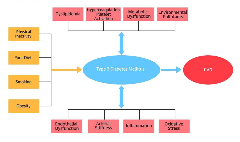 Primary Prevention of Cardiovascular Disease in Diabetes Mellitus