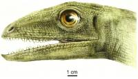 <em>Silesaurus opolensis</em>