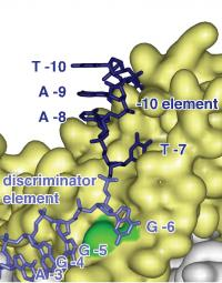 Discriminator Element (2 of 2)