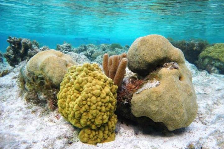 Corals on Turks and Caicos Islands