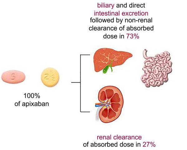 The Main Characteristics of New Oral Anticoagulant with Anti-Xa Activity