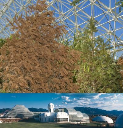 Biosphere 2 Pine Experiment Concludes