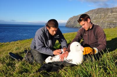 Albatross (1 of 3)