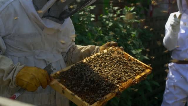 Honey Bees And Scientists