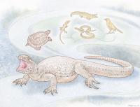 <em>Eunotosaurus</em>