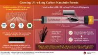 Carbon nanotube (CNT) forests