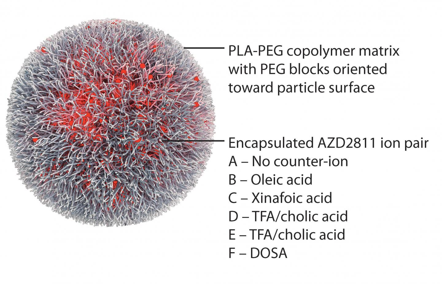 Nanoparticle Reduces Targeted Cancer Drug's Toxicity