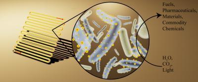 Cyborg Bacteria Outperform Plants When Turning Sunlight into Useful Compounds