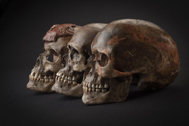 Three ~31,000-Year-Old Skulls from Dolni Vestonice, Czech Republic (1/2)