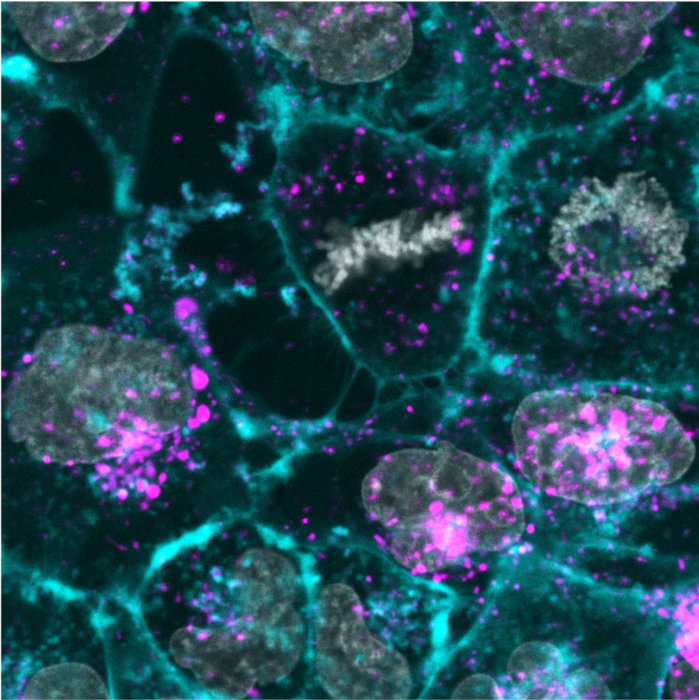 Skin cells cultures