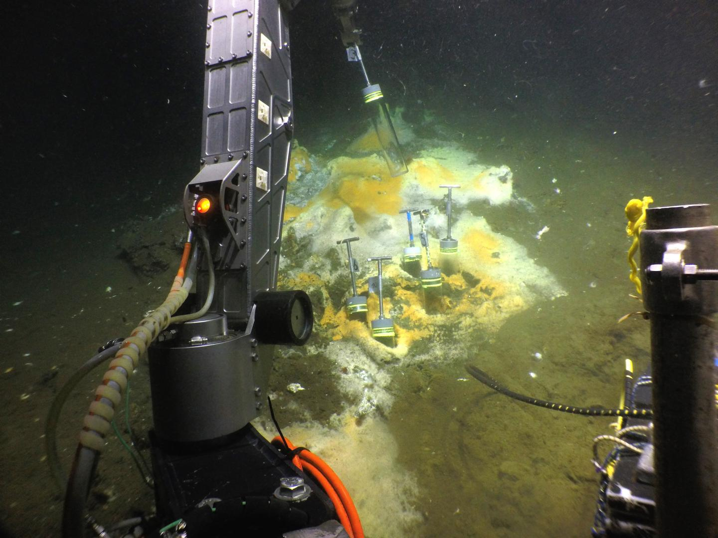 Collecting Samples in the Gulf of Mexico