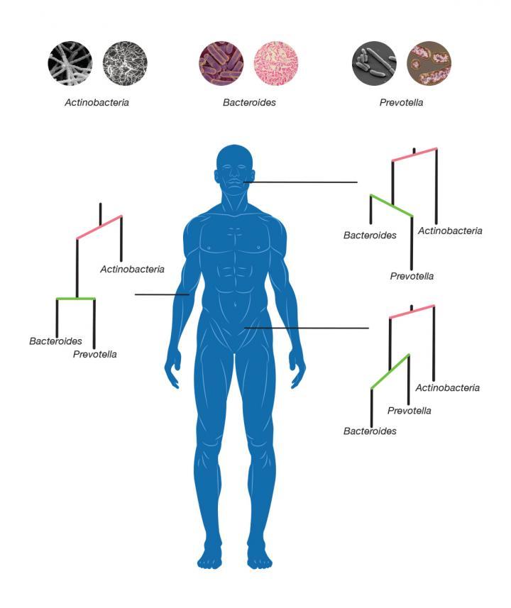 Human Microbiome