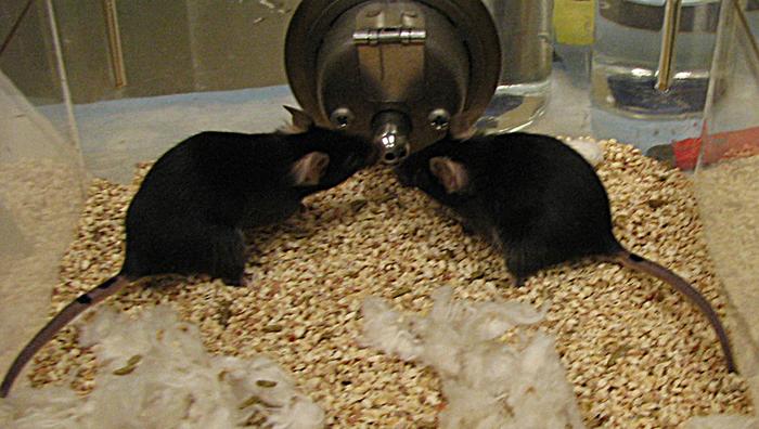Mouse Friends