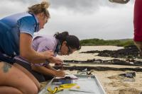 Researchers are training tourism guides to catalogue wildlife