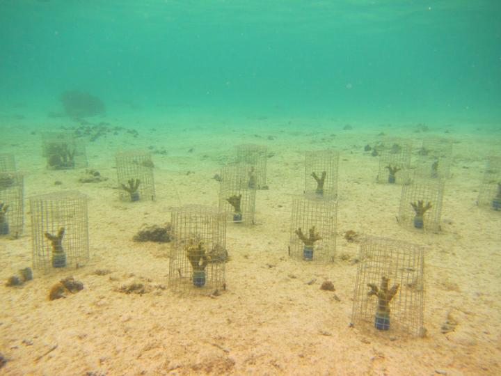 Studying Impact of Snails on Coral