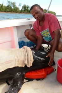 Melon-headed Whale Rescue