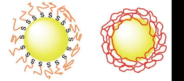 Linear PEG and Cyclic PEG attached to gold nanoparticle