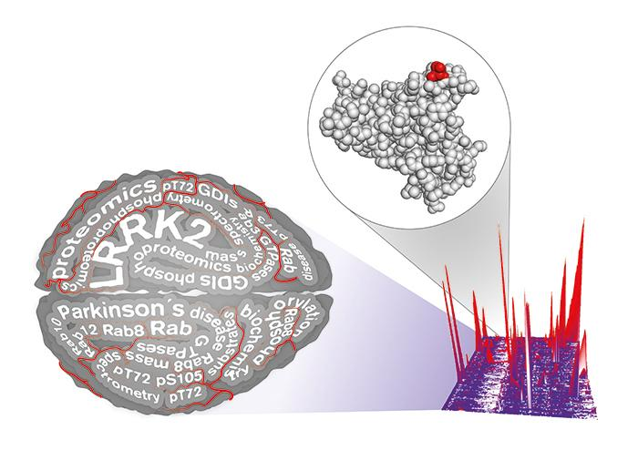 Parkinson-Gene