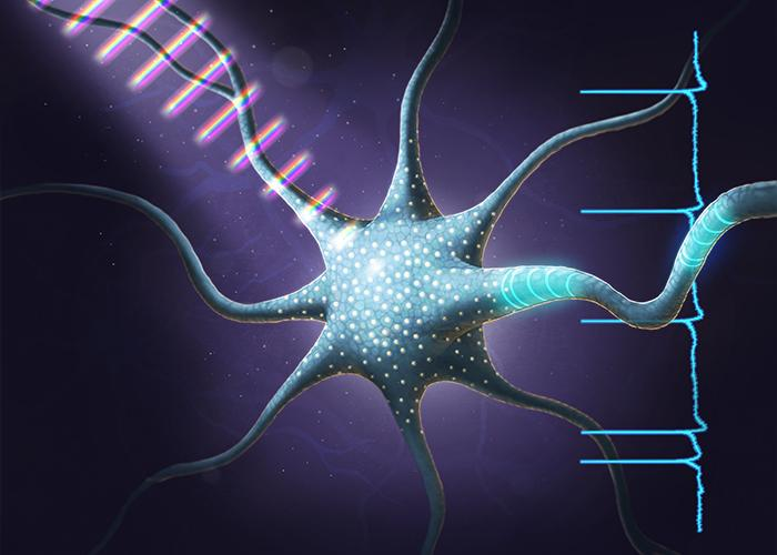 Coherent Control in an Optogenetic Neuron