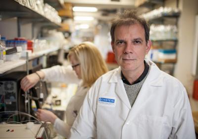 Arturo Casadevall, Albert Einstein College of Medicine