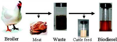 An Abundant Source of Biodiesel Fuel