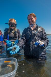Fieldwork on the wreck