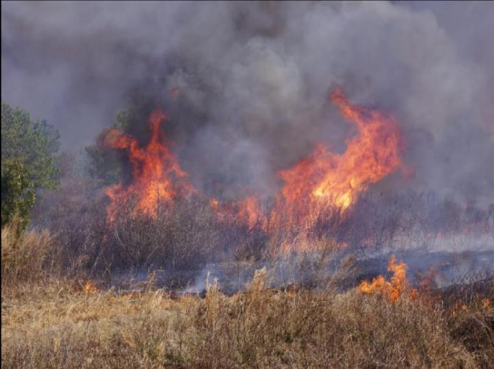 Fire in Pocosin