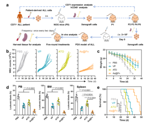 Potent anti-leukemia activity of As@Fn in patient-derived xenograft model